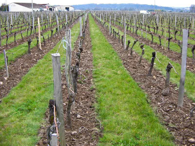 Les objectifs du travail du sol apr s plantation mat vi - Entretien de la vigne ...