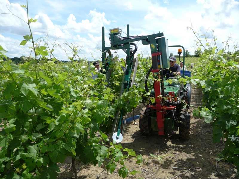 effeuillage mecanique vigne